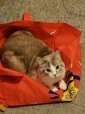 Жизнь кота стоковое фото rf