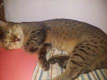 Жизнь кота стоковые фотографии rf