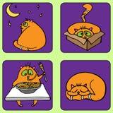 Жизнь котов Стоковые Фото