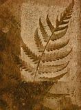 жизнь листьев все еще Стоковое фото RF
