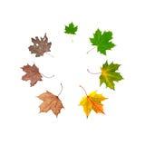 жизнь листьев цикла стоковые изображения rf