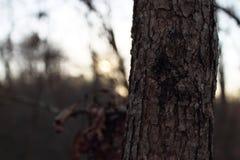 Жизнь маленького города - сиротливое дерево на заходе солнца Стоковая Фотография