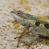 Малый дракон Стоковая Фотография RF