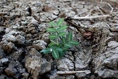 Жизнь над droughtlife над засухой стоковое изображение rf