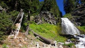 Жизнь национального парка Стоковая Фотография RF