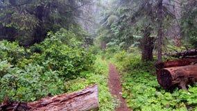 Жизнь национального парка Стоковое фото RF