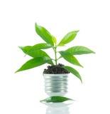 Жизнь на лампе из шарика, зеленая концепция зеленого растения новая энергии Стоковое Изображение