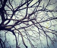 Жизнь на дереве Стоковая Фотография RF