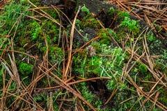 Жизнь на поверхности пня в лесе Стоковые Изображения RF