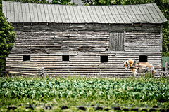 Жизнь на поле фермы в сельской стране Стоковое Изображение