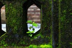 Жизнь на стене Стоковые Фото