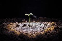 жизнь новая Молодой росток в весеннем времени, крупный план Стоковое Изображение