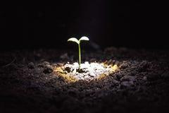 жизнь новая Молодой росток в весеннем времени, крупный план Стоковые Изображения