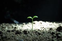 жизнь новая Молодой росток в весеннем времени, крупный план Стоковые Изображения RF