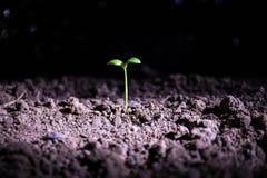 жизнь новая Молодой росток в весеннем времени, крупный план Стоковое фото RF
