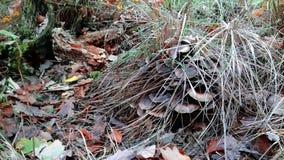 жизнь осени все еще Грибы на пне упаденные листья Листья желтого цвета и зеленая трава стоковые фотографии rf