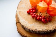 жизнь осени все еще ягоды рябины и физалис на пне Падение выходит, жмет, ashberry на столешнице благодарение стоковое изображение