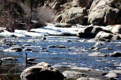 Жизнь потока Стоковое Фото
