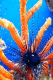 жизнь подводная Стоковое Изображение RF