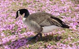 Жизнь птицы на зоне залива Монтеррея Стоковые Фото