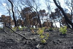 жизнь пущи пожара новая Стоковые Фото