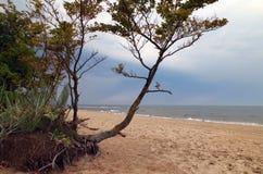 Жизнь пляжа на Балтийском море Стоковое фото RF