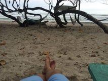 Жизнь пляжа Стоковые Фотографии RF