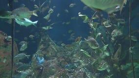 Жизнь растений и рыбы сток-видео