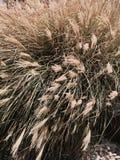 Жизнь растений на озере Стоковое Изображение RF