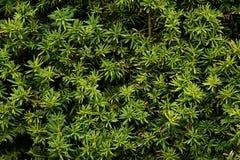 Жизнь растений 8 Стоковые Фото