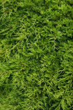 Жизнь растений 7 Стоковые Фотографии RF