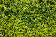 Жизнь растений 6 Стоковые Изображения