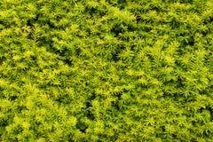 Жизнь растений 10 Стоковое Изображение RF