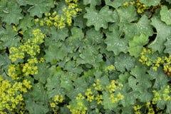 Жизнь растений 19 Стоковое Фото