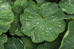 Жизнь растений 20 Стоковое фото RF