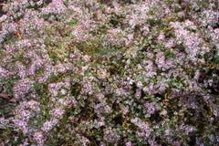 Жизнь растений 47 Стоковые Фотографии RF