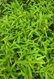 Жизнь растений 36 Стоковое фото RF