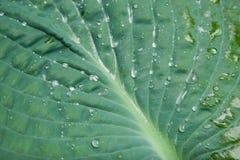 Жизнь растений 43 Стоковая Фотография