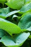 Жизнь растений 45 Стоковые Фото