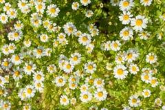 Жизнь растений 93 Стоковые Фотографии RF