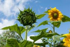 Жизнь растений 61 Стоковое фото RF