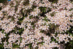 Жизнь растений 79 Стоковое Фото