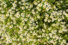Жизнь растений 94 Стоковые Фото