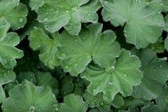 Жизнь растений 53 Стоковое фото RF