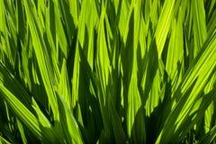 Жизнь растений 47 Стоковое фото RF