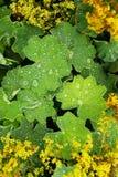 Жизнь растений 52 Стоковое Фото