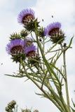 Жизнь растений 76 Стоковые Изображения RF