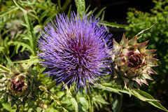 Жизнь растений 78 Стоковое Изображение