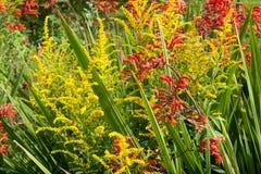 Жизнь растений 117 Стоковое Изображение