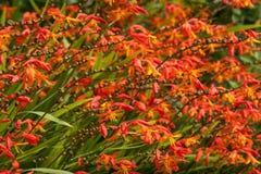 Жизнь растений 116 Стоковое Изображение